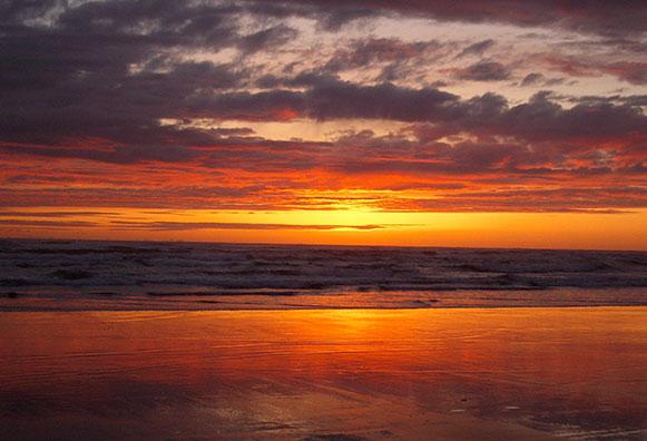 manzanita-golden-sunset
